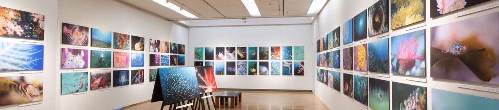 福岡の水中写真展